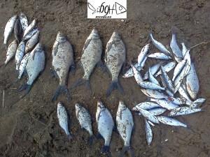Река Созь улов