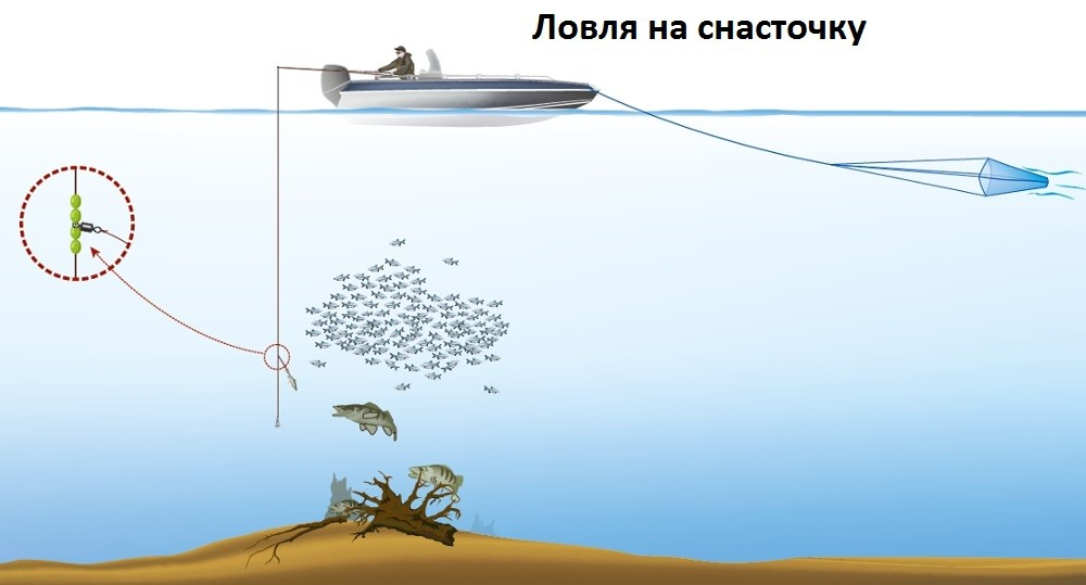 Ловля хищника на снасточку с мертвой рыбой