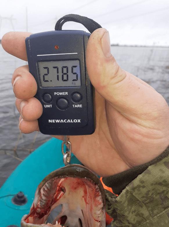 Озеро удомля щука на 3кг