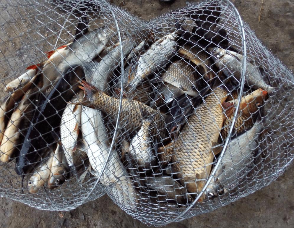 Ловля в удомле на фидер улов