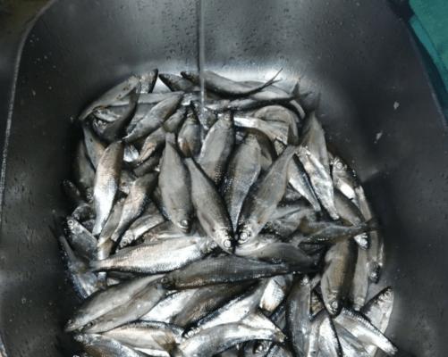 Река Дойбица открыл сезон