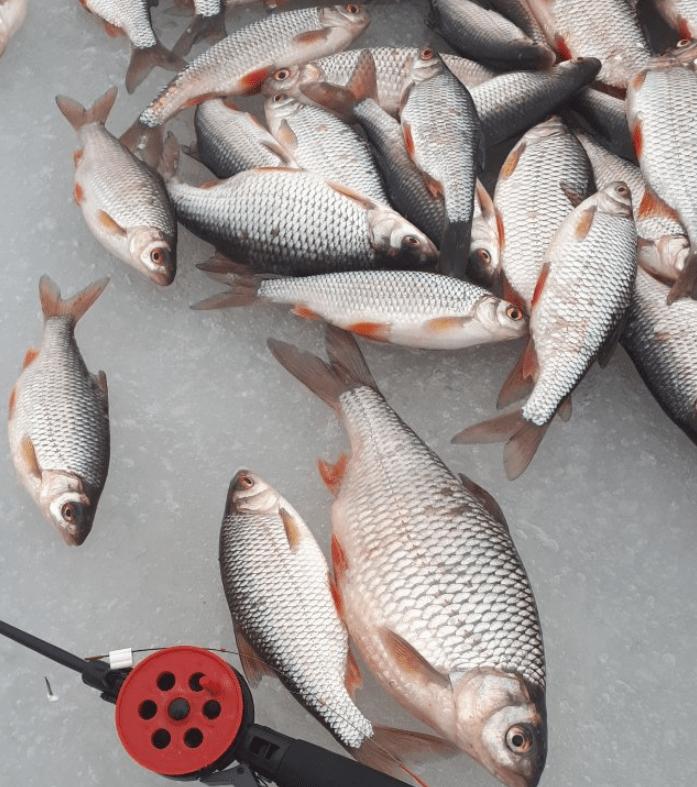 река Сить рыбалка