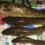 Рыбалка на Волге Элеватор налим