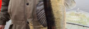Рыбалка в Конаково на судака отчет